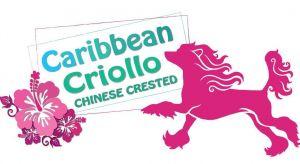 Caribbean Criollo