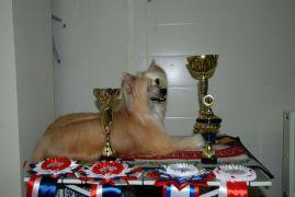 Alvine Band Redhi Golden Boy