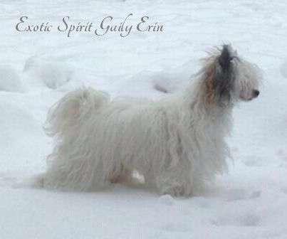 Exotic Spirit Gaily Erin