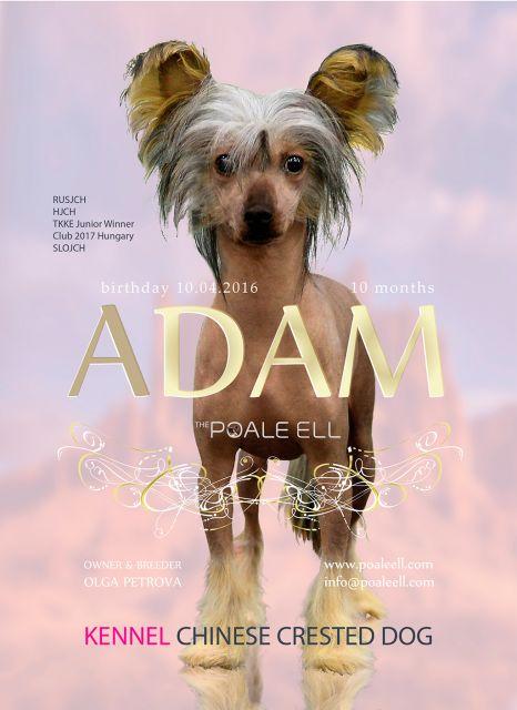 Poale Ell Adam