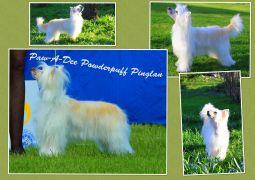 Paw-A-Dee Powderpuff Pinglan