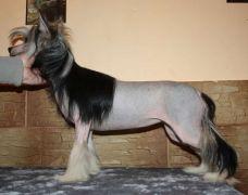 Mimi Dog Doll Jamica