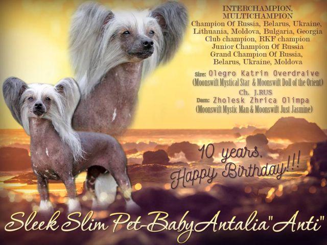 Sleek Slim Pet-Baby Antalia