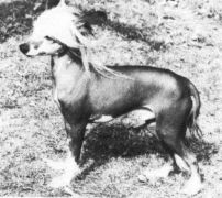 Clogheen Martello