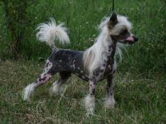 Ritchi Pupo-Haichi