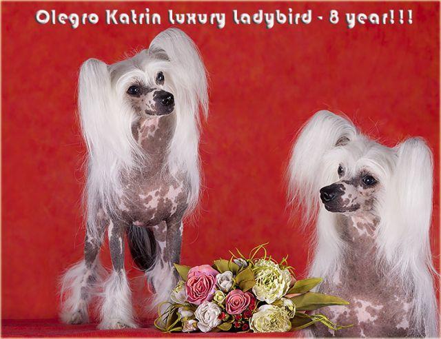 Olegro Katrin Luxury Ladybird
