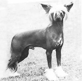 Kojak Kavalier