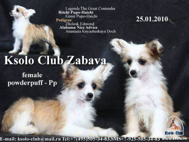 Ksolo Club Zabava