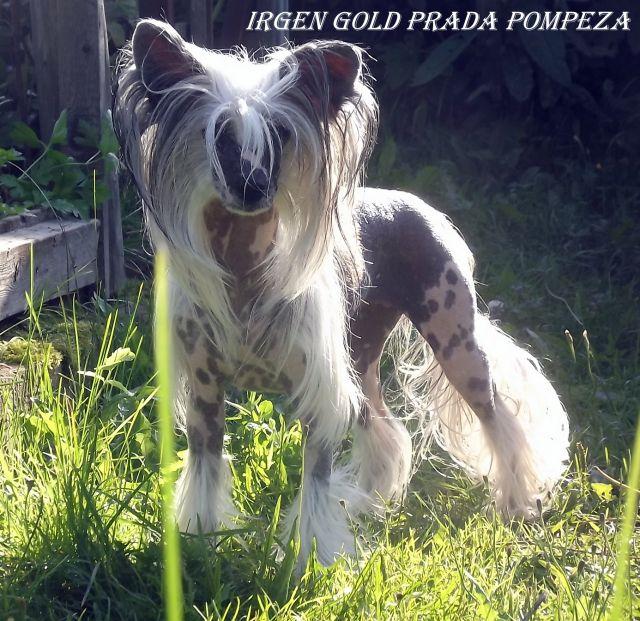 Irgen Gold Prada Pompeza