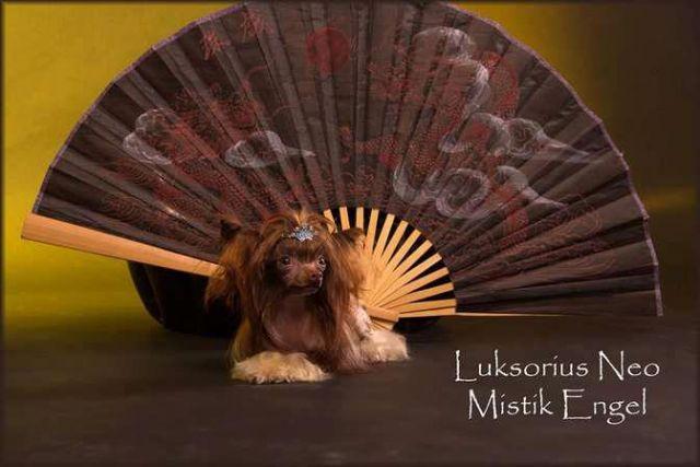 Luksorius Neo Mistik Engel