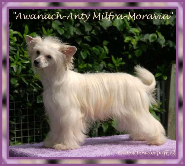 Awanach-Anty Milfra-Moravia