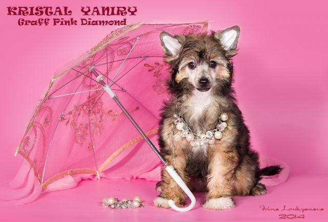 Kristal Yaniry Graff Pink Diamond