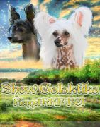 Show Galaktika Limited Edition