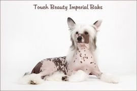 Touch Beauty Imperial Baks