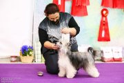 Club Dog Show Club Winner – powderpuff female Sofiris Show Massandra