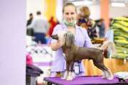 Club Dog Show Club Winner – hairless male Grand Passage Valegro