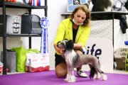 Club Dog Show Club Winner – hairless female Lorita Star Zazhigatel'naya Melodiya