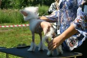 Club Dog Show Candidat in Club Winner – hairless female Status Imperial Next My Pride