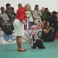 National Dog Show CAC – China, Zhongshan (Guangdong)